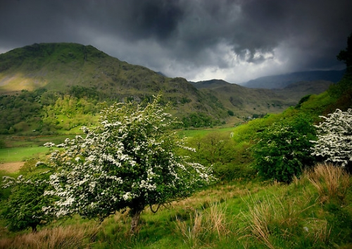 work.5573150.1.flat,550x550,075,f.north-wales-how-green-was-my-valley.jpg