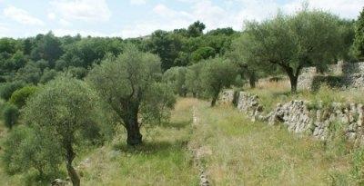 Restanques_oliviers-b8372.jpg