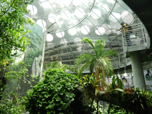 Academy-of-Sciences-rain-forest-canopy.jpg