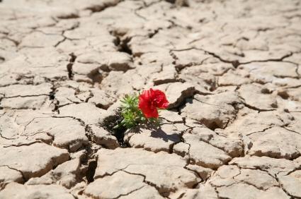resilience1.jpg