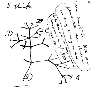 dessin-darwin-i-think-evolution.jpg