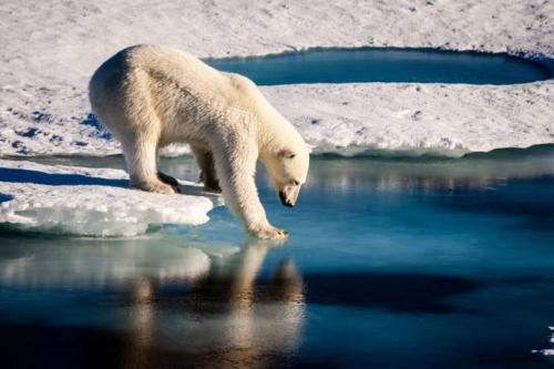 arctique.jpg