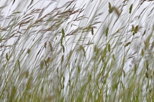 hautes herbes.jpg