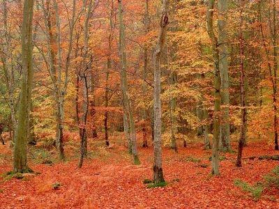 normal_automne_joliecarte5.jpg