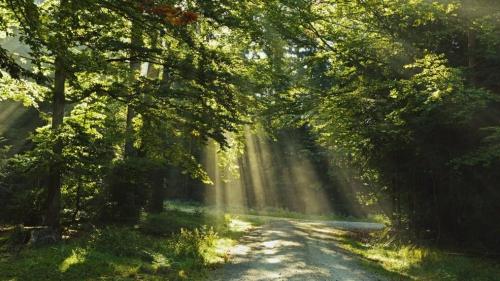 sa forêt.jpg