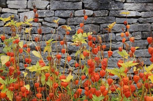 automnekeats.jpg