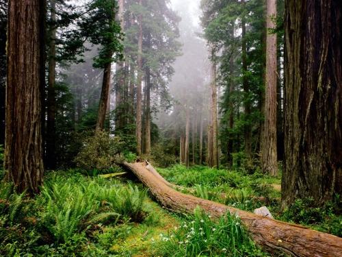 Foret_en_Californie_1024x768.jpg