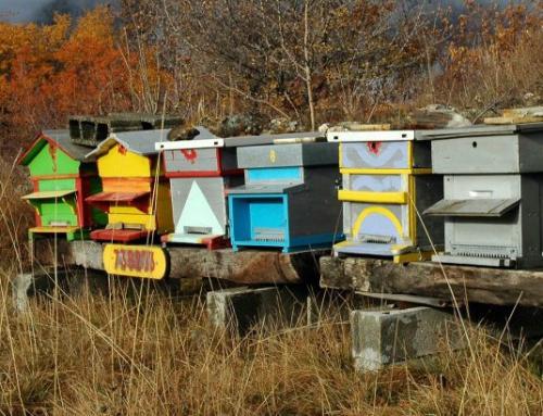 ruche-en-couleurs-535x410.jpg