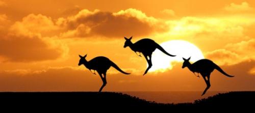 kangourous.jpg