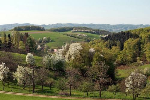 wandern-hessen-odenwald.jpg