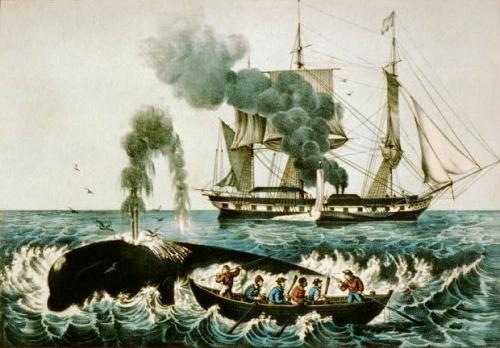 baleiniere-2-gd.jpg