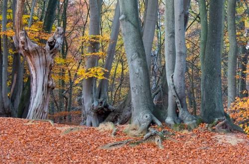 Forêt d'Epping près de Londres.jpg