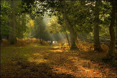 new-forest-1.jpg